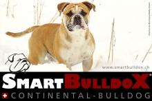 smartbulldox_bobby_brown_1