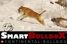 smartbulldox_bobby_brown_10