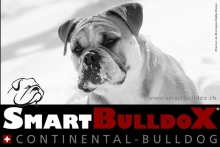 smartbulldox_bobby_brown_11