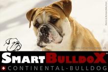 smartbulldox_bobby_brown_12