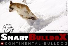 smartbulldox_bobby_brown_13