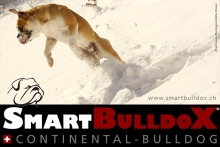 smartbulldox_bobby_brown_14