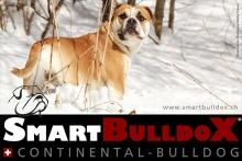 smartbulldox_bobby_brown_15