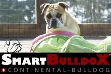 smartbulldox_bobby_brown_2