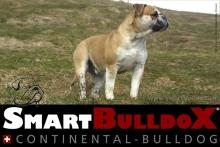 smartbulldox_bobby_brown_3