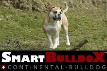 smartbulldox_bobby_brown_4