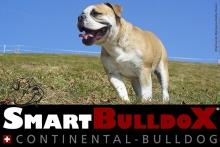 smartbulldox_bobby_brown_5