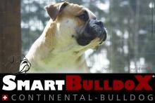 smartbulldox_bobby_brown_6