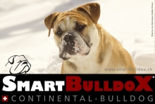 smartbulldox_bobby_brown_7
