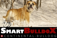 smartbulldox_bobby_brown_8