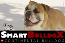 smartbulldox_bobby_brown_9
